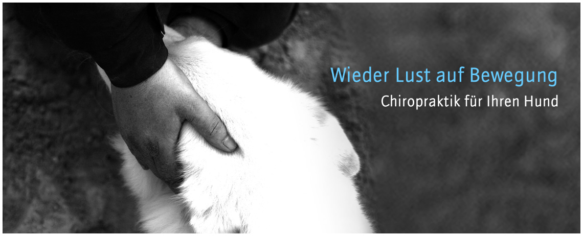 Chiropraktik für den Hund