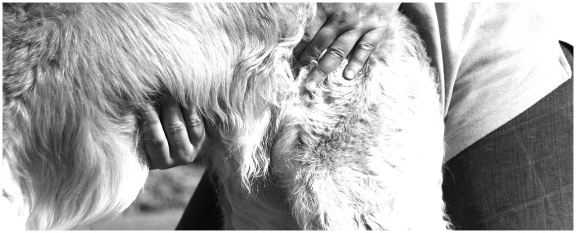 Chiropraktik am Hund