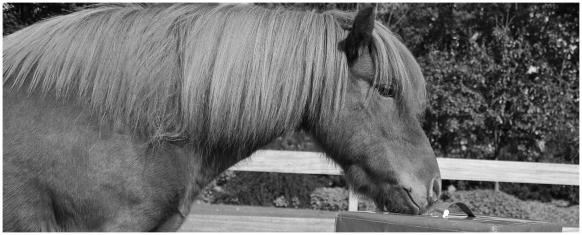 Chiropraktik am Pferd