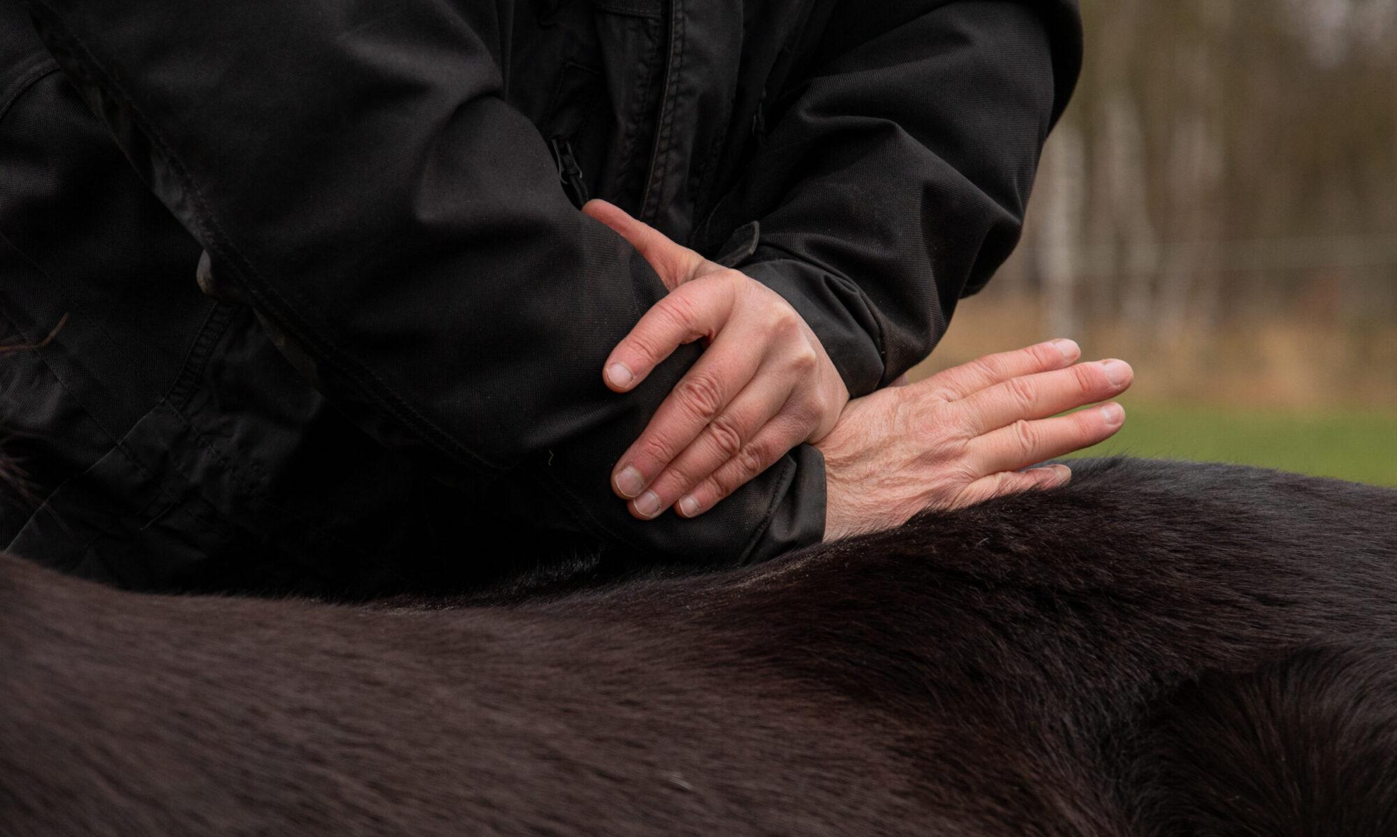 Tierärztin Angela Rogge Praxis für Chiropraktik & Rehabilitation